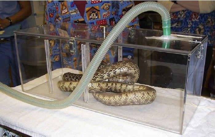 Анестезия для змей