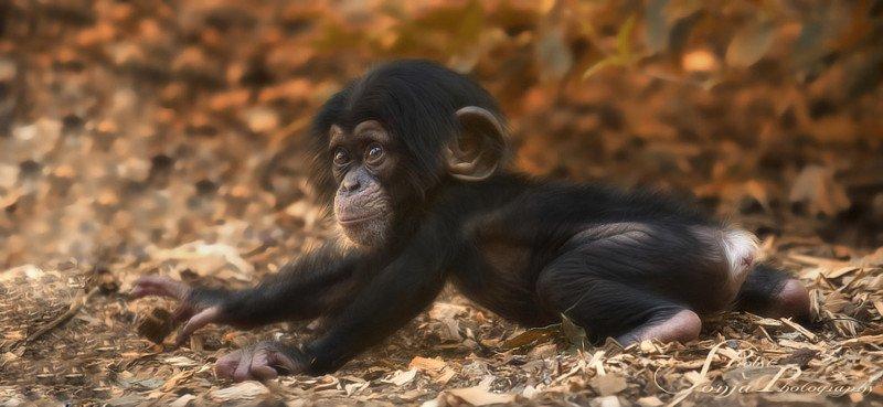 Фотографии диких животных