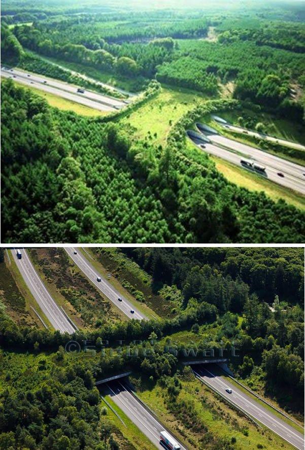 Мосты и переходы для диких животных