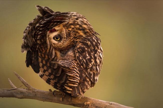 Подборка фотографий, которыми совы могут гордиться