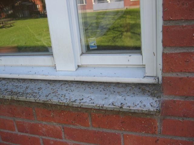 Гусеницы непарного шелкопряда обосновали дом