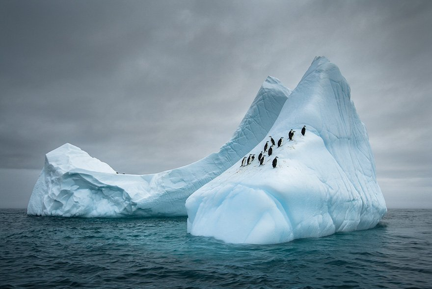 Красивые и интересные фотографии с пингвинами