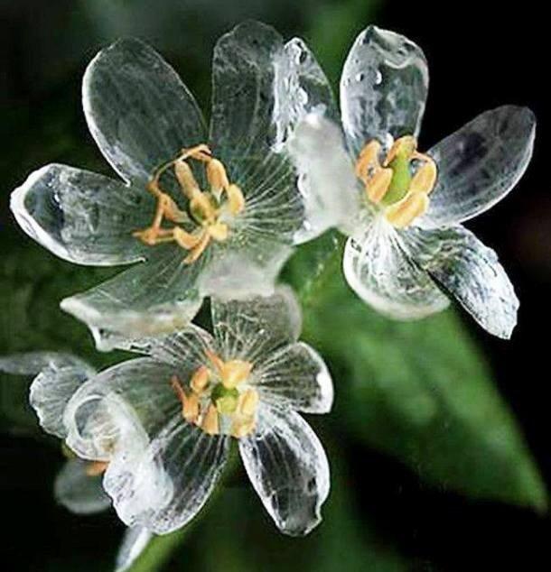 По-настоящему причудливые и уникальные растения