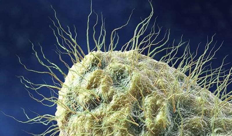 5 неприятных микроорганизмов, которые живут рядом с нами