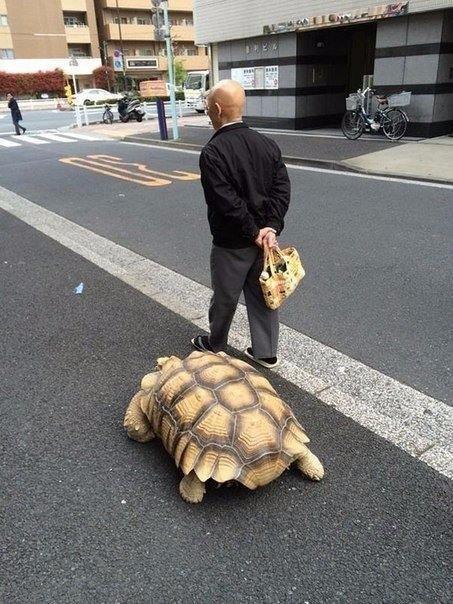 Мужчина выгуливает свою черепаху