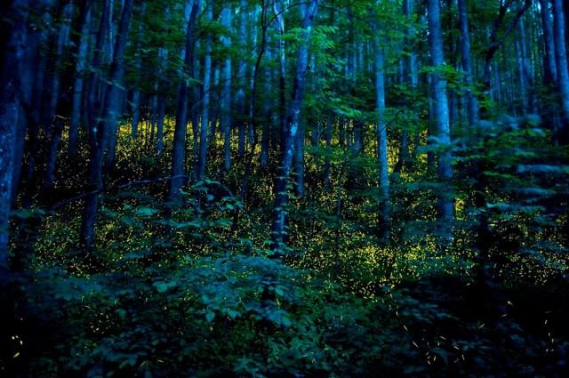 Волшебные места, которые оживают ночью