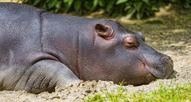 7 животных, которые не отказывают себе в здоровом сне
