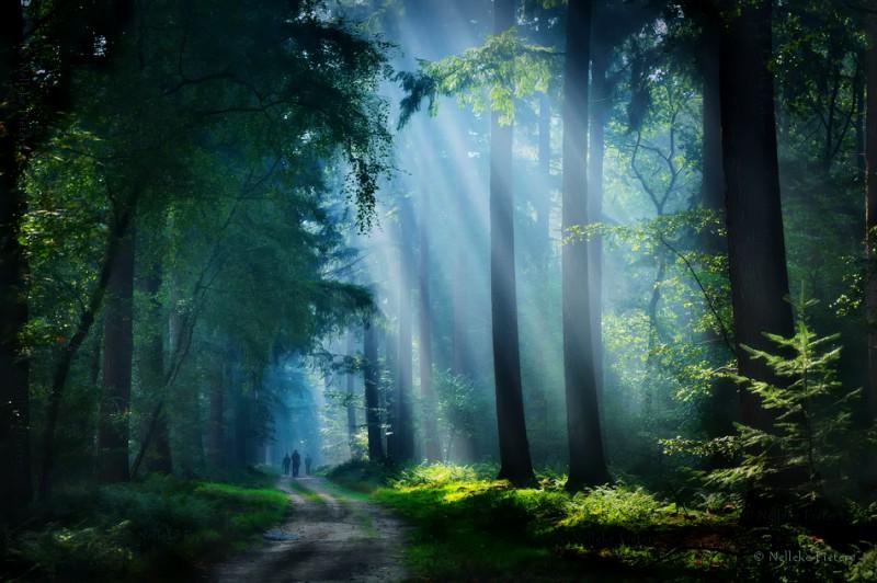 Таинственные леса Голландии