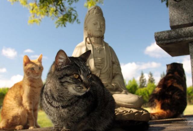 В этом удивительном доме дружно живут более 700 кошек