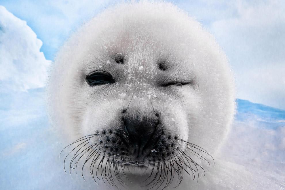 Воины, смешной тюлень картинка