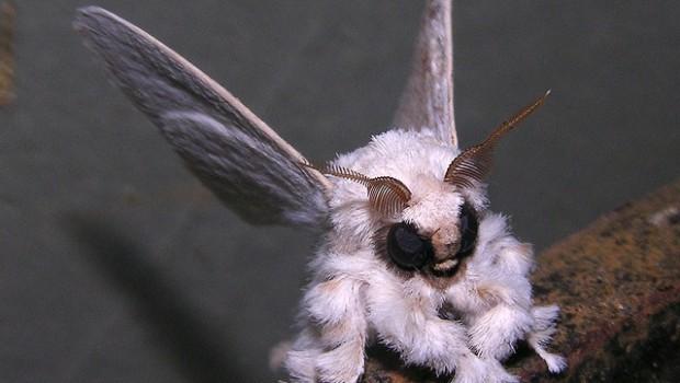 10 ужасающих существ, о которых вы, возможно, не знали