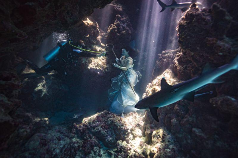 Сюрреалистические картины с реальными акулами