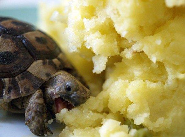 Животные, которые любят поесть