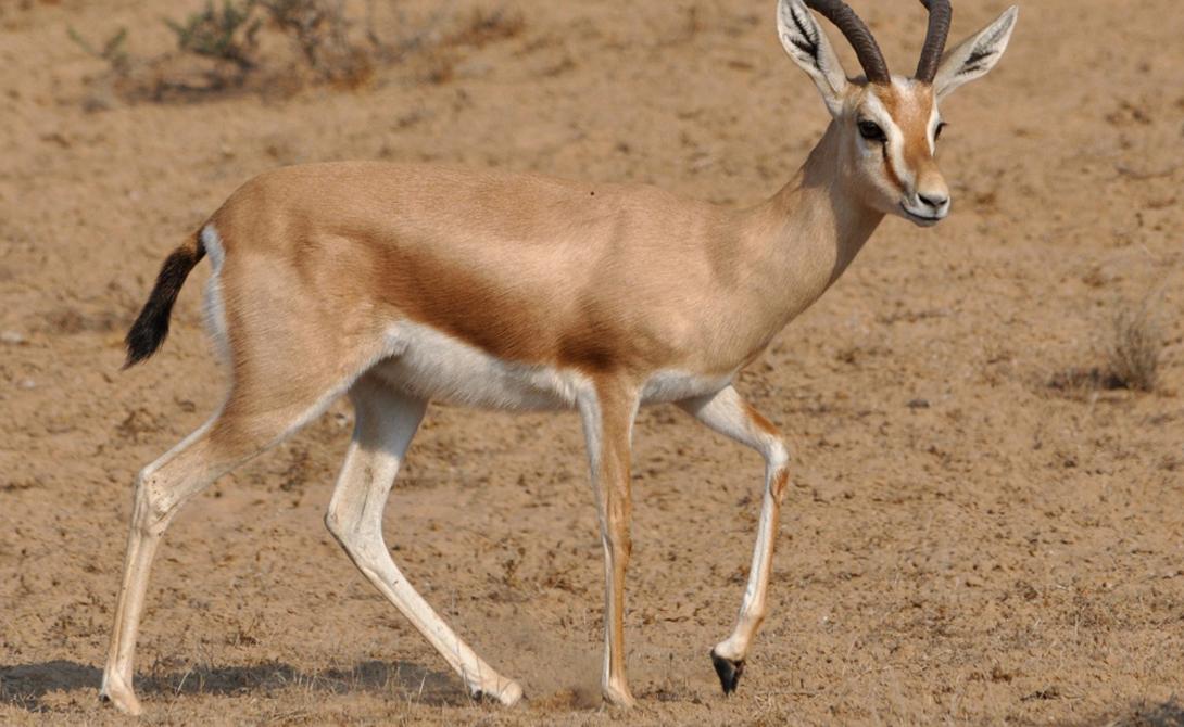 Удивительные животные, которые смогли бы выжить где угодно