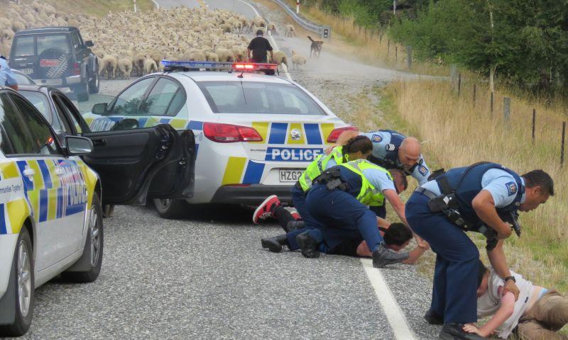В Новой Зеландии, удирая от полиции, рано или поздно нарвешься на овец
