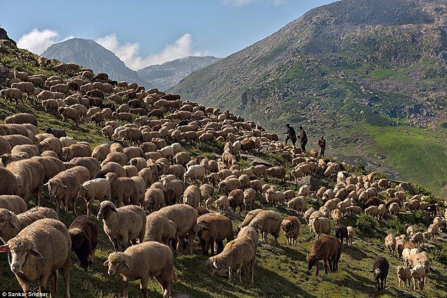 Как живёт кашмирский кочевой народ бакарвалы