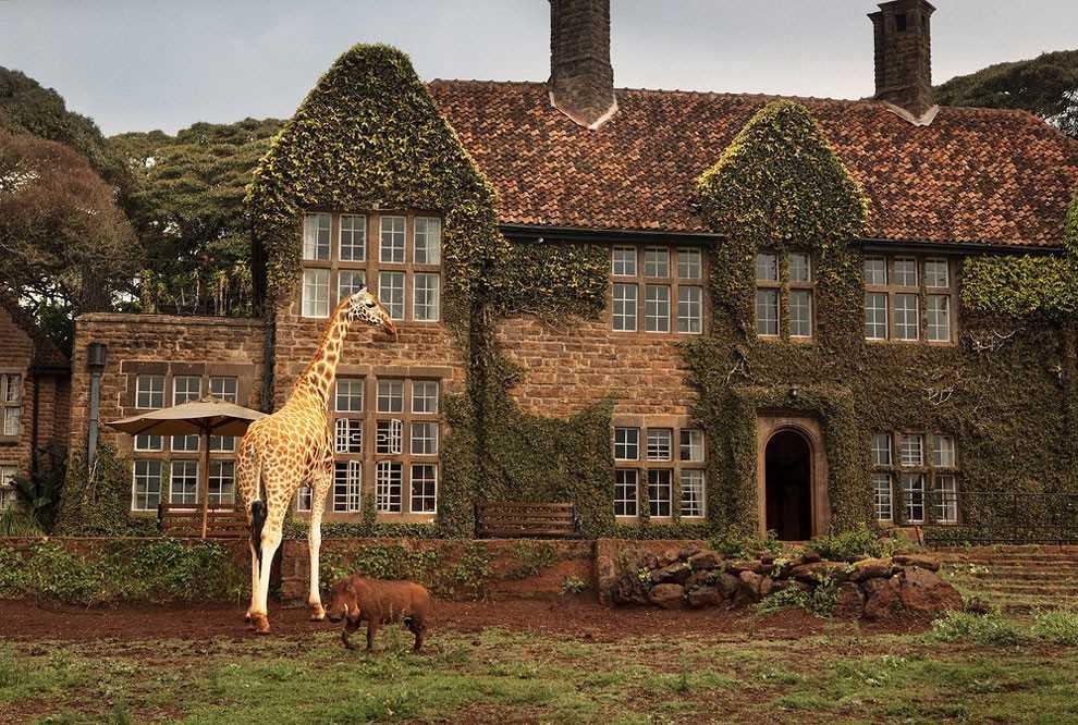 Поесть с жирафом за одним столом