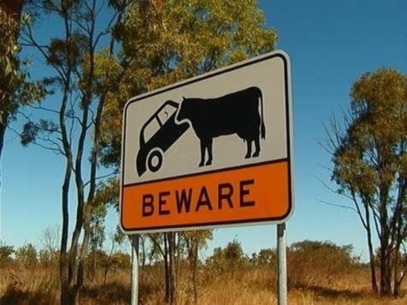 Смертельные опасности на фото из Австралии