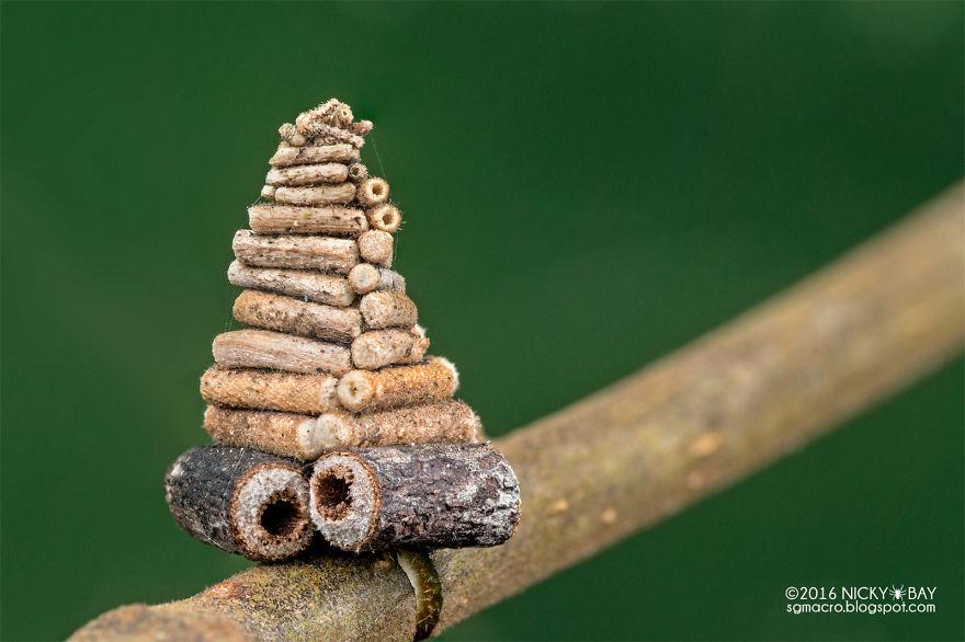 7 загадочных сооружений от гусениц мешочницы