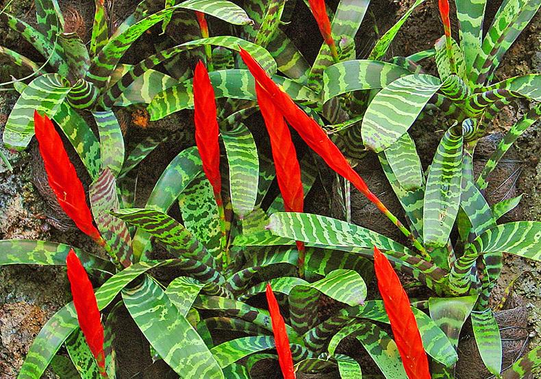 10 необычных комнатных растений