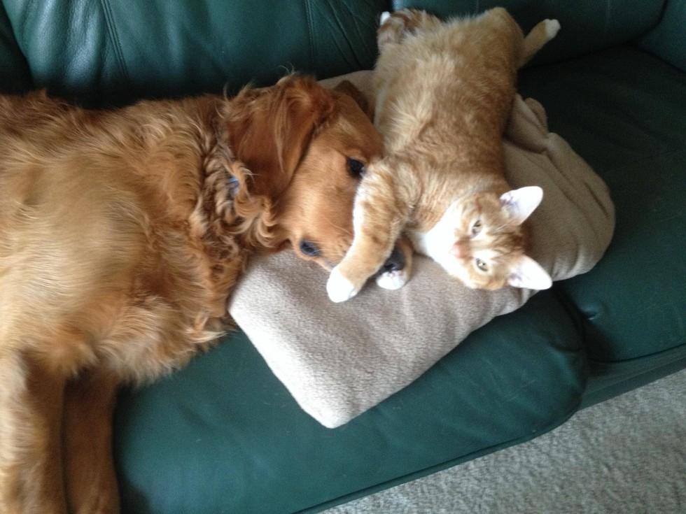 Фото котов, которые по уши втрескались в собак