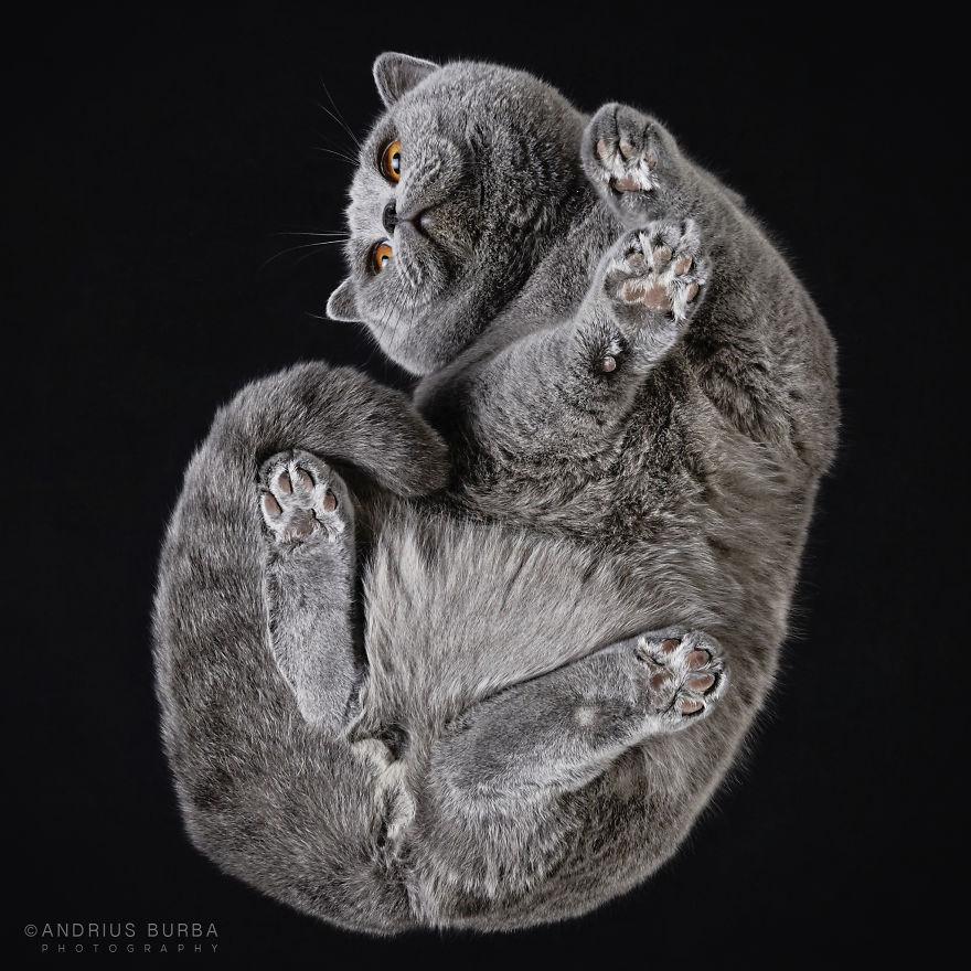 Милые лапы котов с недоступного человеку ракурса