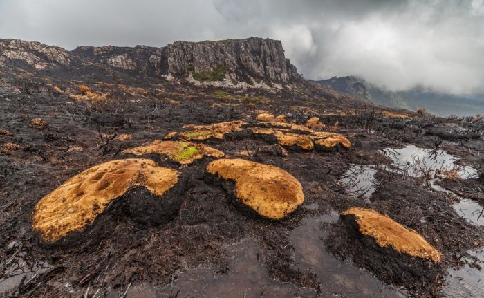 Тасмания пострадала от сильнейшего лесного пожара