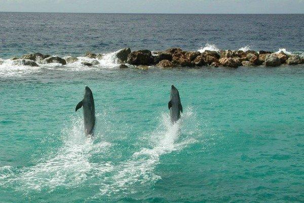 Животные, которые умеют передвигаться по воде