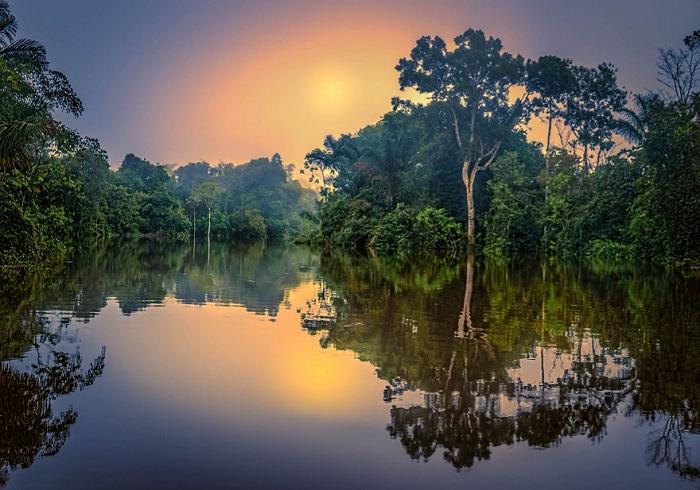 22 красивых леса, которые хранят свою вековую историю