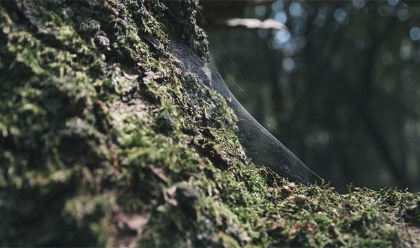 Интересные факты о деревьях, которых мы не знали