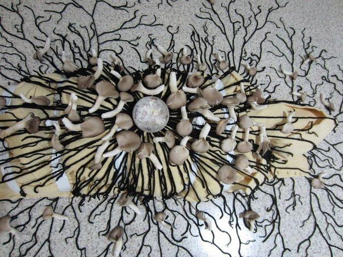 Корейский дизайнер предлагает утилизировать останки человека при помощи грибов