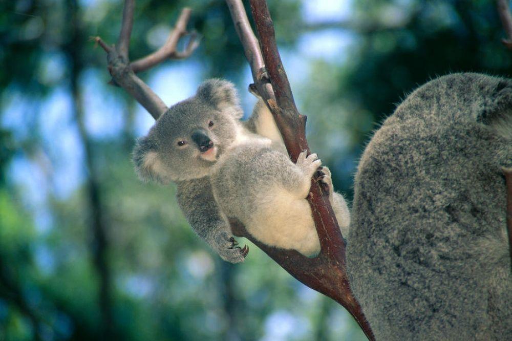 Почему хочется в Австралию