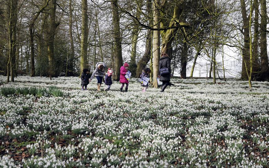 Ранние весенние цветы, которые распускаются из-под снега