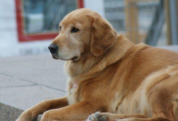 Самые дорогостоящие породы собак в мире