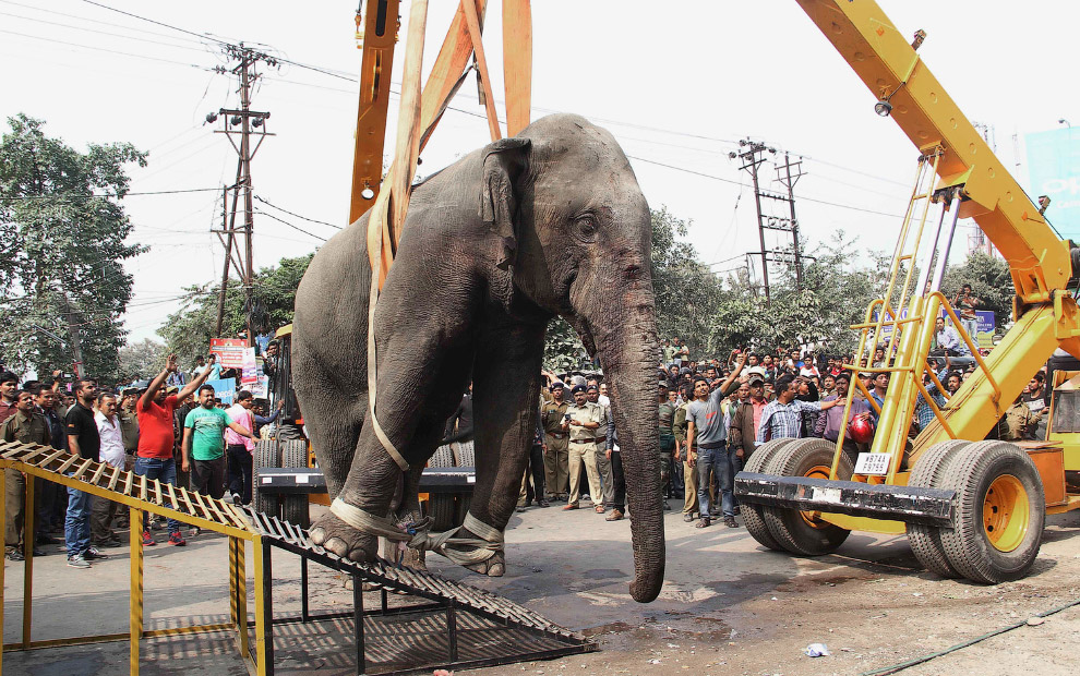 Дикий слон неожиданно устроил переполох