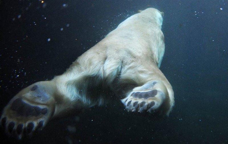 Животные, снятые с необычного ракурса