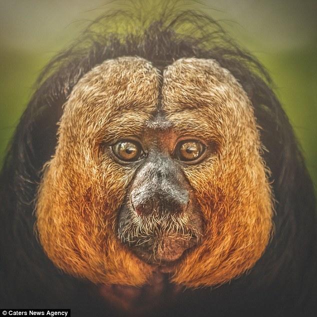 Поразительная схожесть мимики человека и приматов