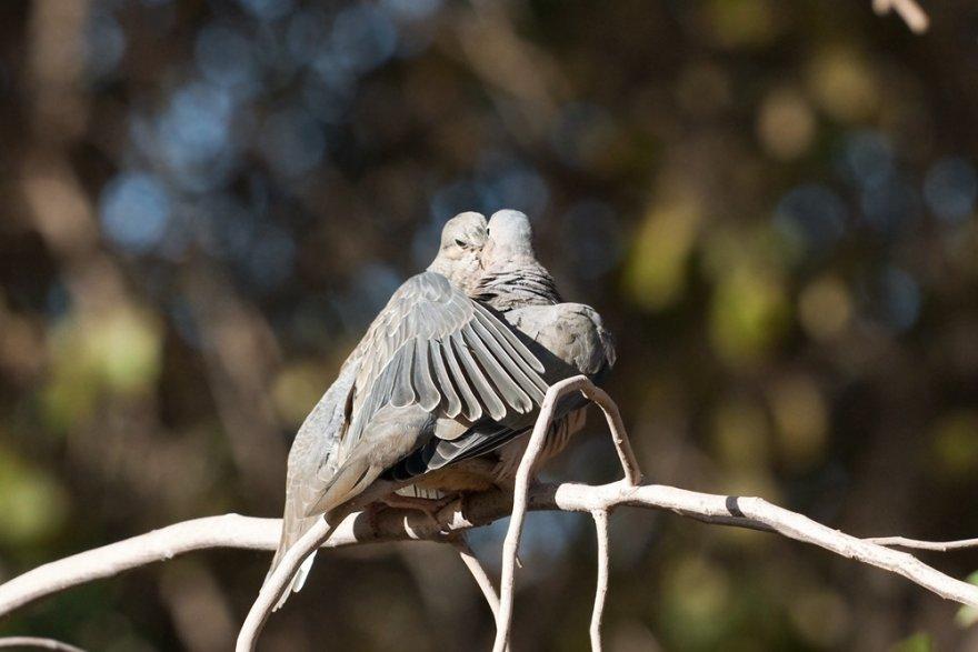 Животные, которые служат примером верности и любви