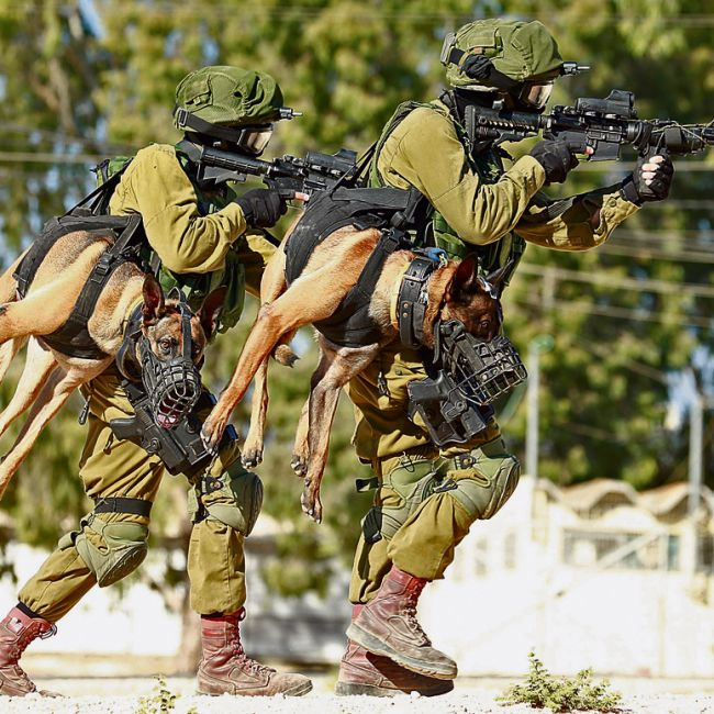 Как переносят тактических собак в израильской армии