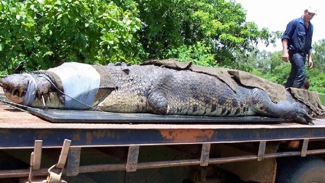 В Австралии рыбаки поймали гигантского крокодила
