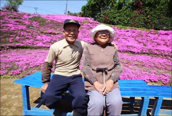 Японский фермер разбил гигантский цветник для слепой жены