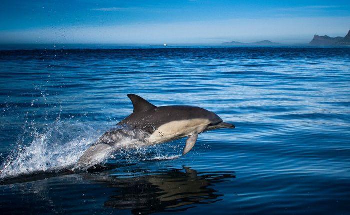 Шокирующая информация о дельфинах
