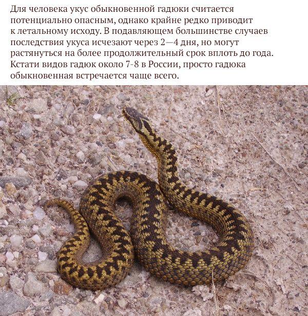Самые опасные животные России