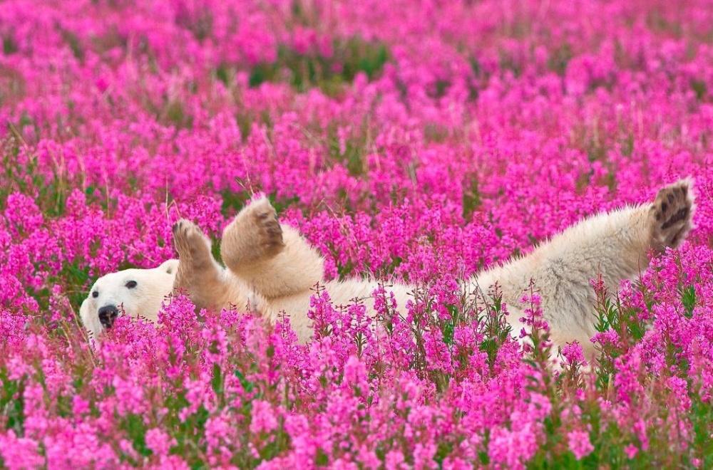 20 животных, которые соскучились по весне
