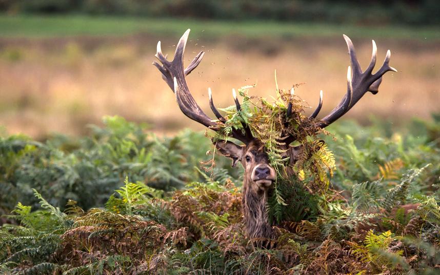 Победители конкурса фотографий дикой природы Nature Photography Awards