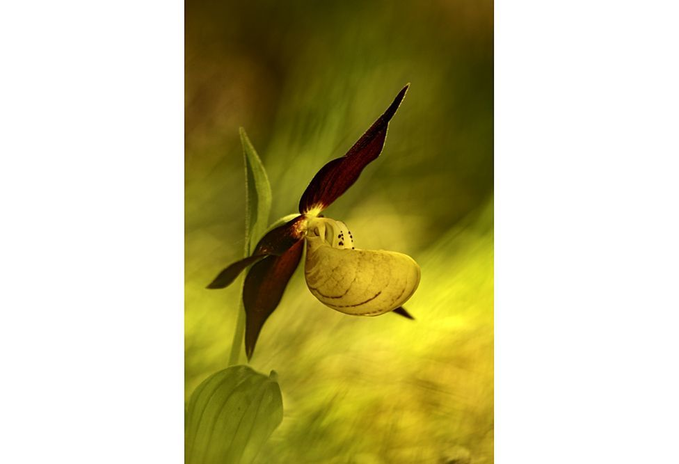 Победители фотоконкурса садовой фотографии International Garden Photographer of the Year