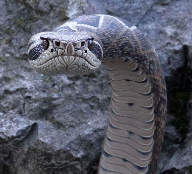 Невероятно реалистичные трости в виде змей