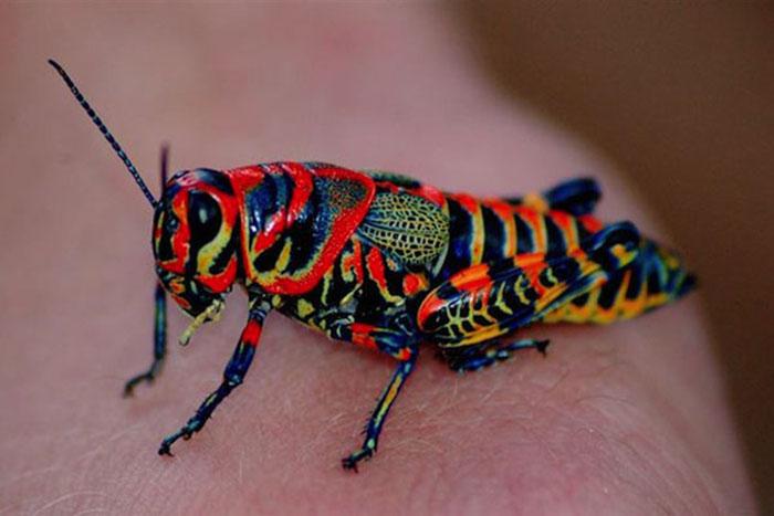 15 красочных и очаровательных животных
