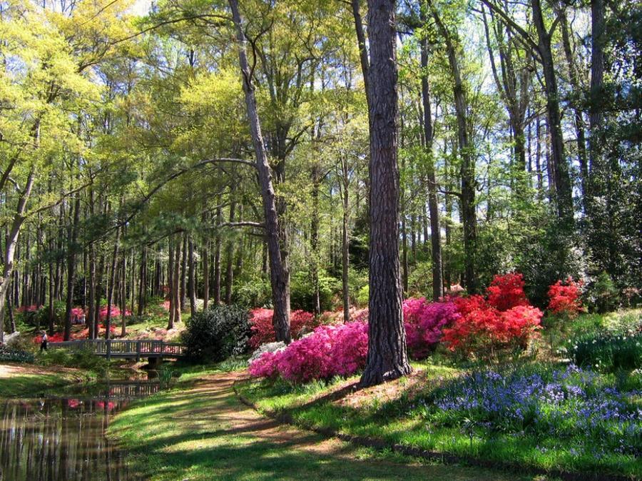 Буйство красок природы с приходом весны
