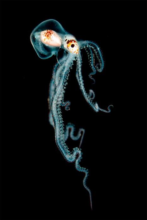 Лучшие снимки с международного конкурса подводной фотографии